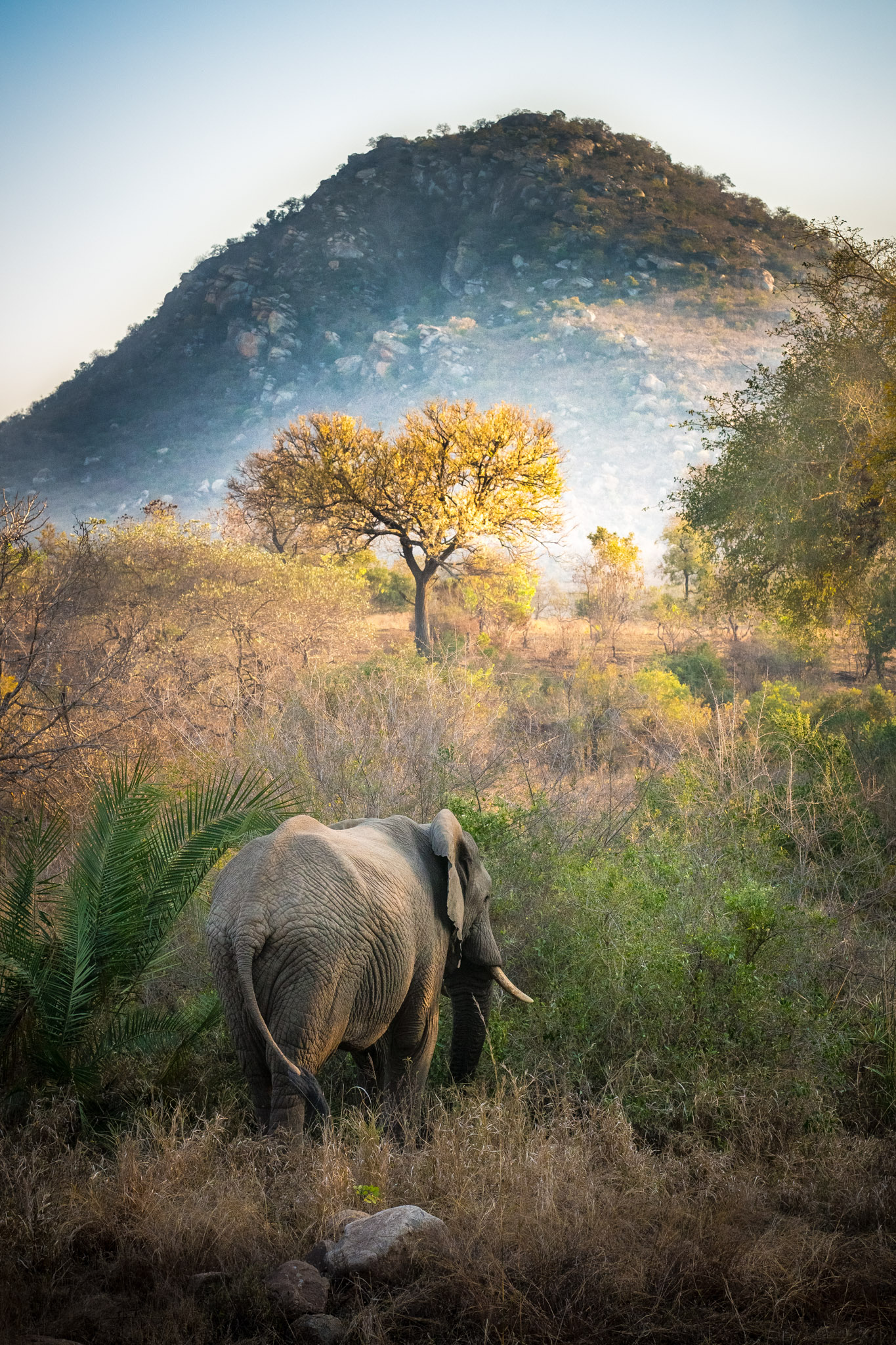 Elephant, Berg-en-Dal, Kruger National Park, South Africa