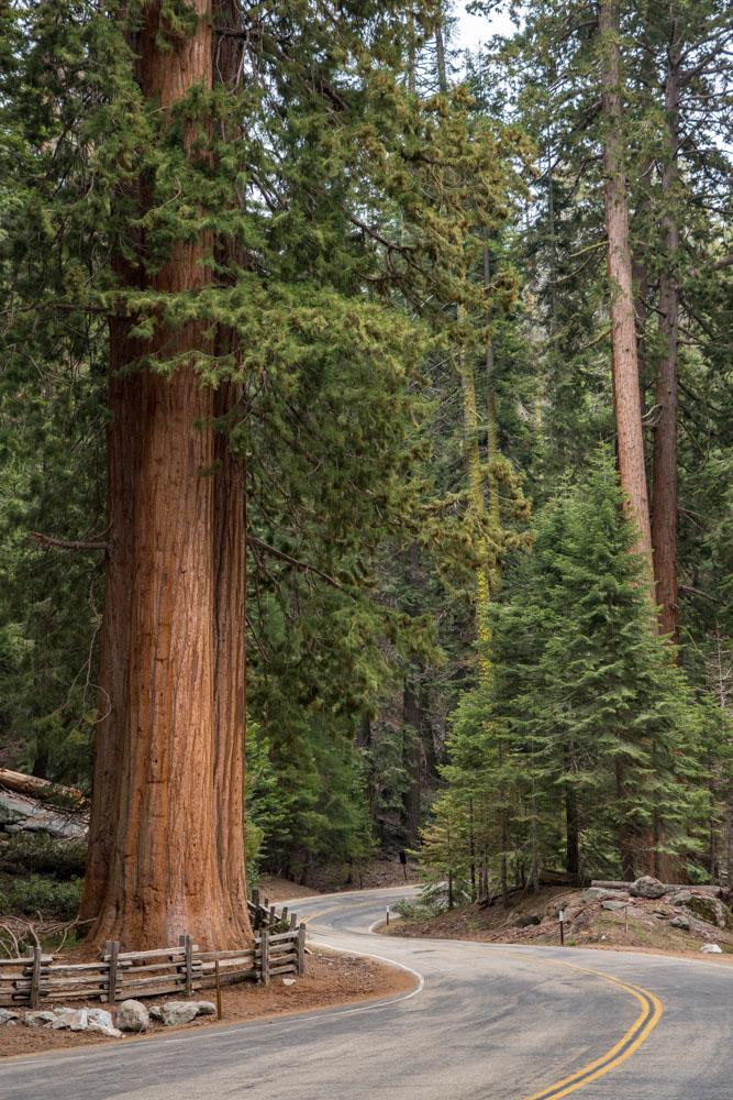 Sequoia-Swerve
